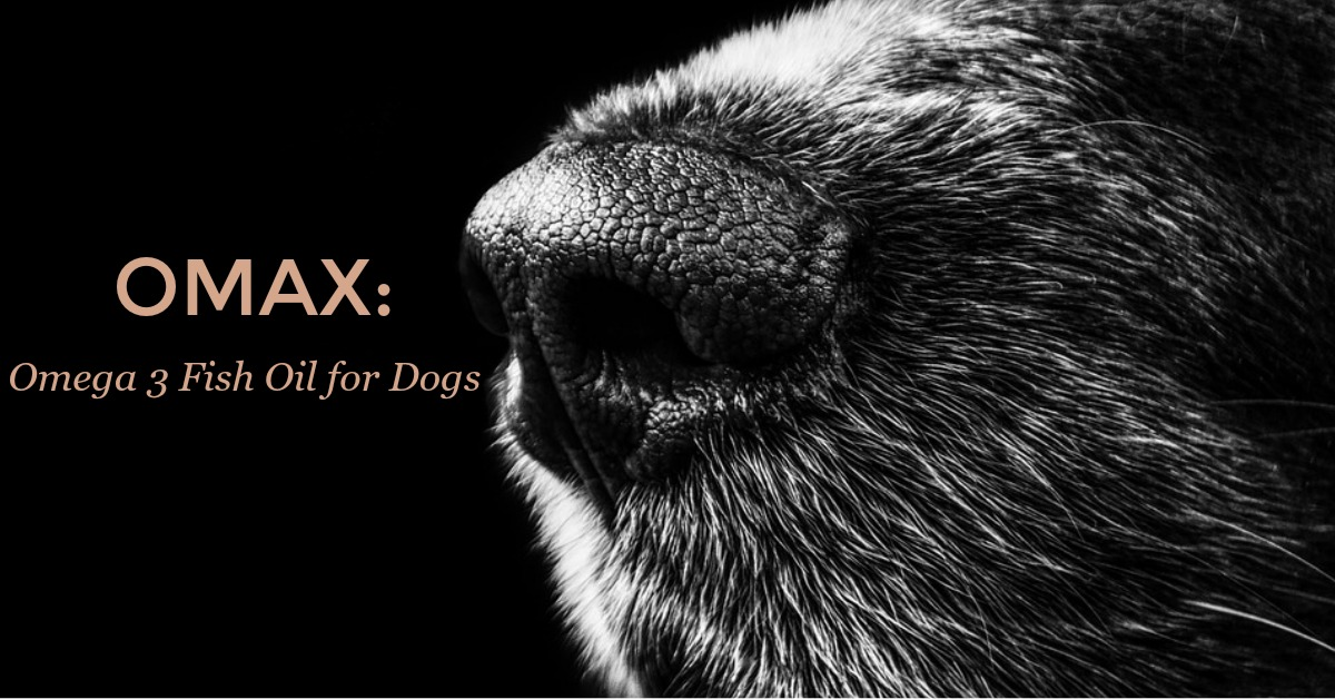 Omax3 omega 3 fish oil for dogs spark of southern moms for How much fish oil for dogs
